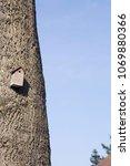 bird house mounted on a tree... | Shutterstock . vector #1069880366