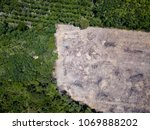 Rainforest Deforestation - Drone view of tropical rainforest cleared for illegal logging and palm oil plantations - stock photo