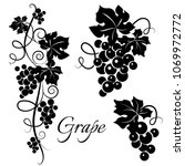 set of black grapevine... | Shutterstock .eps vector #1069972772