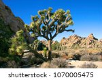 Joshua Tree Landscape Yucca...