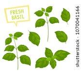 cartoon basil plants isolated... | Shutterstock .eps vector #1070041166