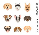 flat style dog head icons.... | Shutterstock . vector #1070043152