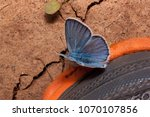 Cute Copper Butterfly And...