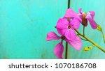beautiful background horizontal ...   Shutterstock . vector #1070186708