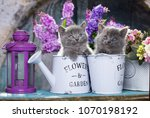 Stock photo kittens and flowers 1070198192