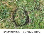 Small photo of Mere, Wiltshire / UK - Apr16,2018: Hoof mark in the grass.