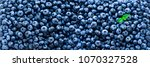 Fresh Blueberries Background...