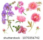 watercolor pink peonies with... | Shutterstock . vector #1070356742