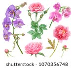 watercolor pink rose  peonies ... | Shutterstock . vector #1070356748