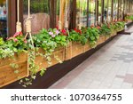 flowers in the design of tubs... | Shutterstock . vector #1070364755
