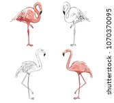 hand drawing flamingos. vector... | Shutterstock .eps vector #1070370095