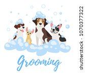 Stock vector vector cartoon style illustration of dogs of different breeds in soap foam grooming concept 1070377322