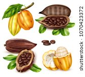 isolated and realistic cocoa... | Shutterstock .eps vector #1070423372