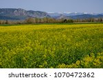 Rape field in the Alpes de Haute Provence, France. Montagne of Lure in the background.