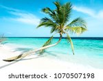 tropical coconut palm tree by... | Shutterstock . vector #1070507198