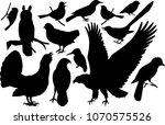 vector set of woodland birds...   Shutterstock .eps vector #1070575526