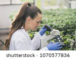 young pretty woman agronomist... | Shutterstock . vector #1070577836