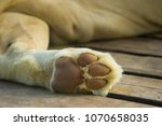 Lion's Paws While Sleeping On...