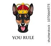 russian toy terrier. crown. dog ... | Shutterstock .eps vector #1070664575