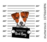 jack russell terrier prisoner.... | Shutterstock .eps vector #1070664896