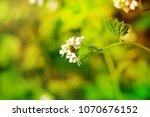 nature. spring. summer. green... | Shutterstock . vector #1070676152