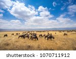 Herd of gnus in the middle of...