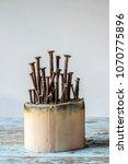 Small photo of Nail Mushroom on banana stalk pith