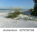 Sea Turtle Nest On White Sand...
