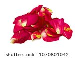 Stock photo red rose petals on white background 1070801042