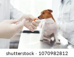 Stock photo syringe with injection of medicine for the dog veterinary clinic concept services of a doctor for 1070982812