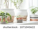 the stylish interior of home...   Shutterstock . vector #1071043622