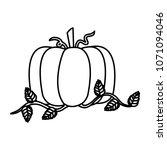 line organic pumpkin vegetable...   Shutterstock .eps vector #1071094046