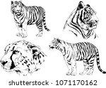 vector drawings sketches... | Shutterstock .eps vector #1071170162