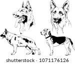 vector drawings sketches... | Shutterstock .eps vector #1071176126