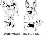 vector drawings sketches... | Shutterstock .eps vector #1071176132