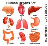 realistic human organs set... | Shutterstock .eps vector #1071186098