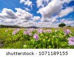 beautiful flower and sky in mt...   Shutterstock . vector #1071189155