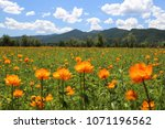 spring landscape. mountain... | Shutterstock . vector #1071196562