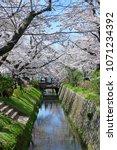 philosopher s path kyoto  ... | Shutterstock . vector #1071234392
