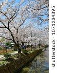 philosopher s path kyoto  ... | Shutterstock . vector #1071234395
