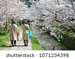 philosopher s path kyoto  ... | Shutterstock . vector #1071234398