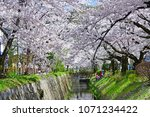 philosopher s path kyoto  ... | Shutterstock . vector #1071234422