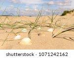 sea shells and  grass at wells... | Shutterstock . vector #1071242162