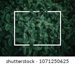 creative layout made of leaves... | Shutterstock . vector #1071250625