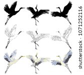 crane sketch  bird flying over...   Shutterstock .eps vector #1071252116