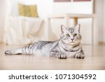 Silver Tabby Cat In A Living...