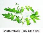 green leaf blurry spot | Shutterstock . vector #1071315428