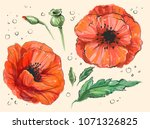 red poppy papaver rheas hand... | Shutterstock .eps vector #1071326825