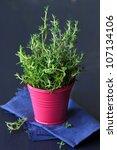 Fresh spicy thyme on a dark blue background. - stock photo