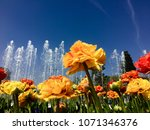 colorful tulips in spring | Shutterstock . vector #1071346376